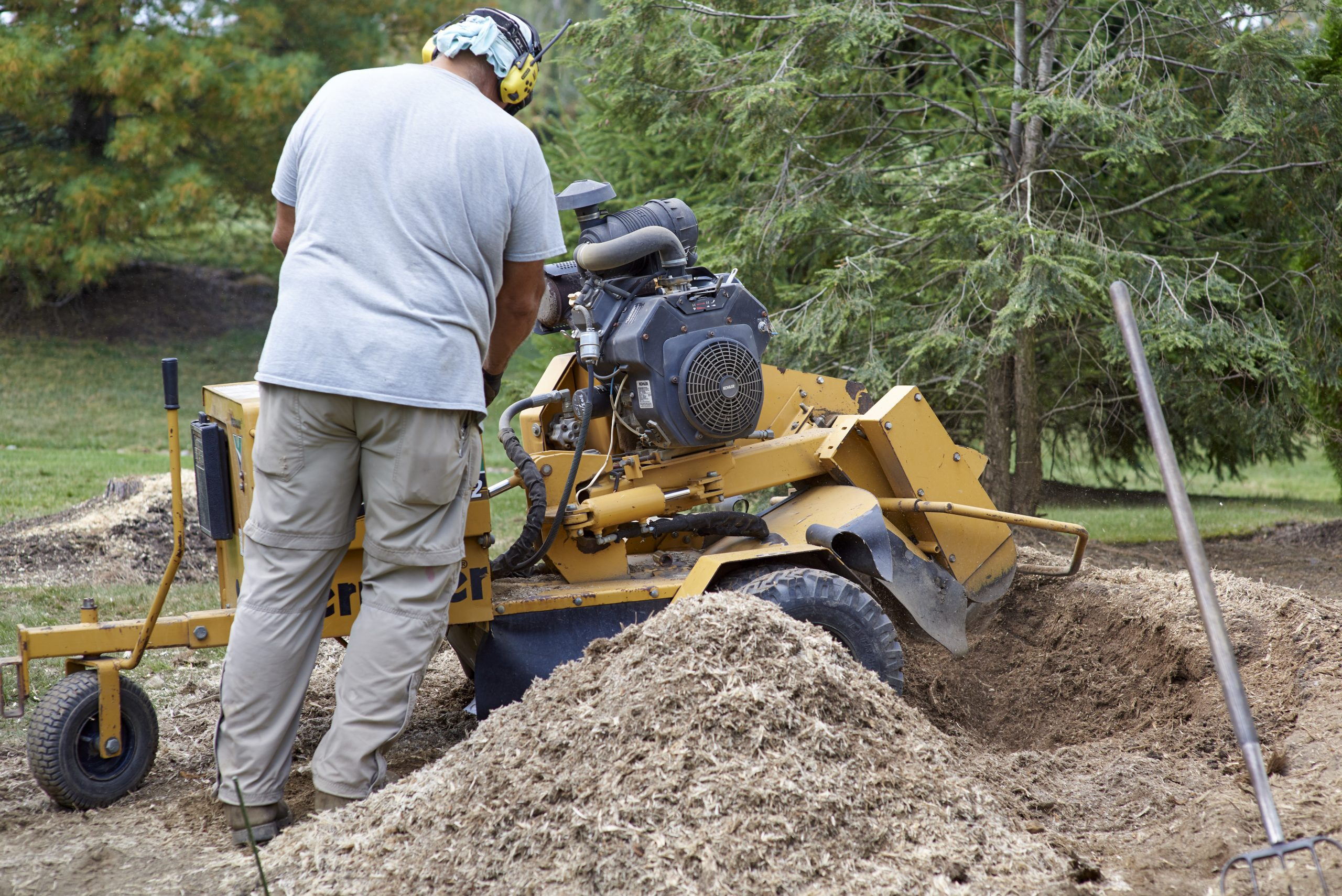 stump grinding service quincy ma