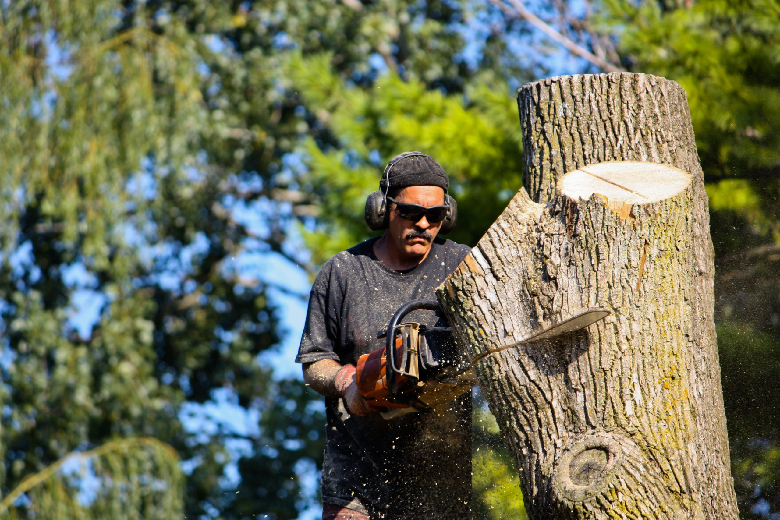 tree specialists quincy ma