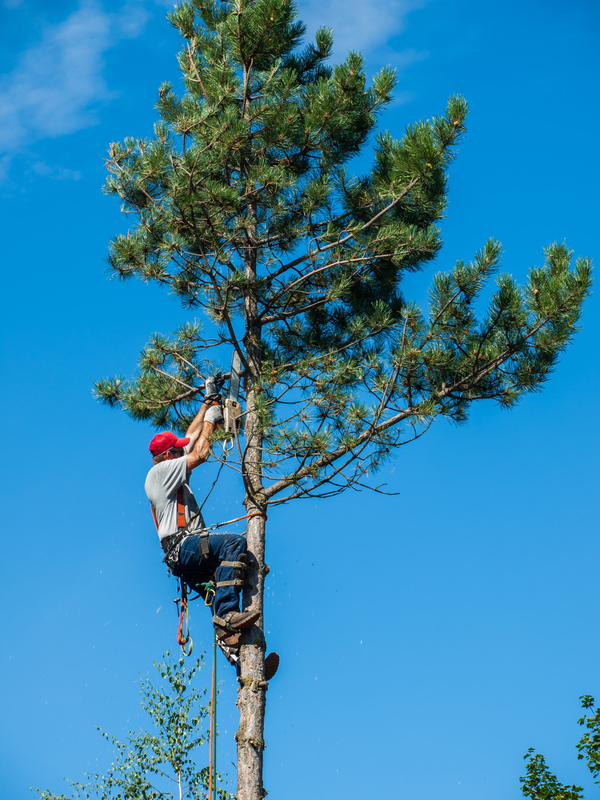 tree trimming service Quincy MA